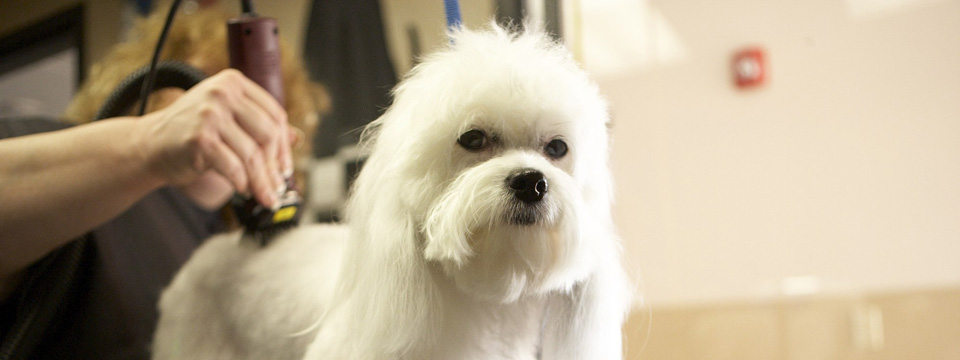 Rexpointe Dog Grooming